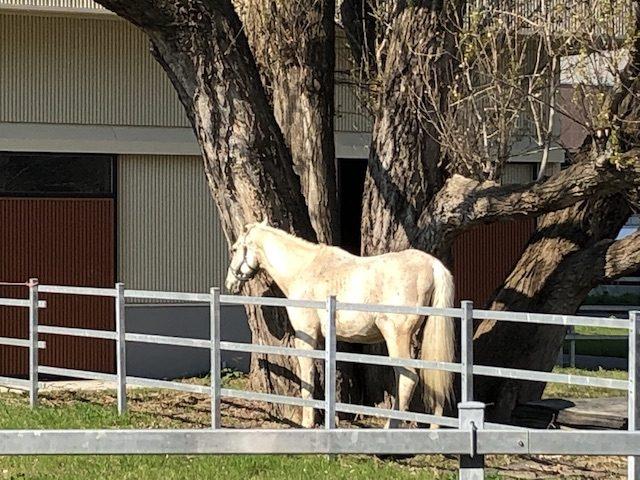 北大札幌キャンパスの馬