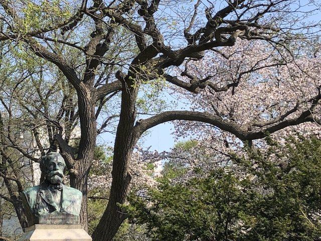 北大の桜とクラーク像